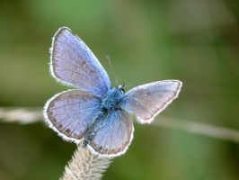 Blue Butterfly by Mad-Popietro