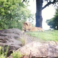 Simba just chilling by Hawklegs