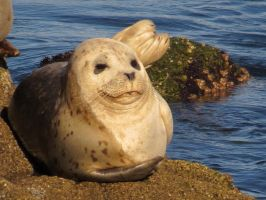 Smiling Seal Pup by Glacierman54