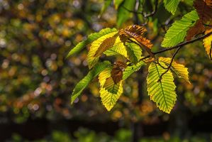 Autumn Green by lesterlester