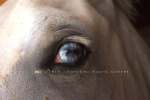 Blue-Brown eye by Azeltik