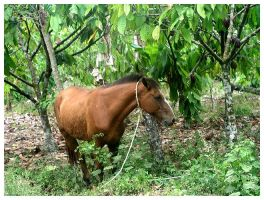 jungle horse by Antosia