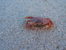 crab 4 by simbion-stock