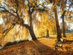 Morning gold II. by realityDream