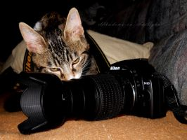 MY Nikon, miauw miauw by Shadows-in-Twilight