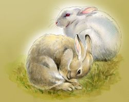 RABBITS by Emushi