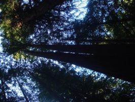 Redwoods by erenaes6