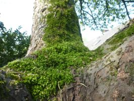 moss tree by cacharoth
