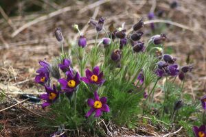 Red Butte - Purple Flowers by LycanDID