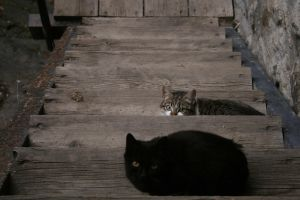 Cats and wood by cyborg
