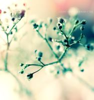 Baby's breath II . ... by light-from-Emirates