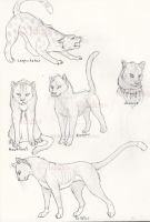 Warriors Cats by Idess