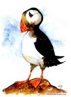 bird watercolour 2 by rogercruz