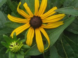 yellow fluer and de bud (2) by Stetabebe