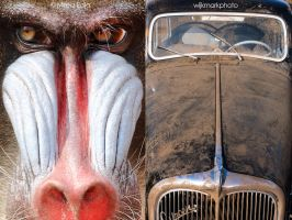 Too much monkey business by DRIVINGYOU