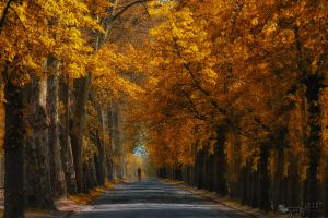 Stay or Leave... by ildiko-neer