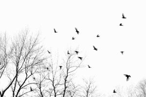 flock of common starlings by GuillaumGibault
