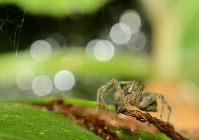 Spider by corsuse