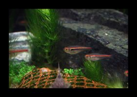Fish In The Tank 01 by Hector42