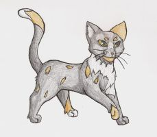 Patchpaw by Simatra
