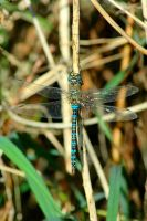 Dragonfly 4 by teslaextreme