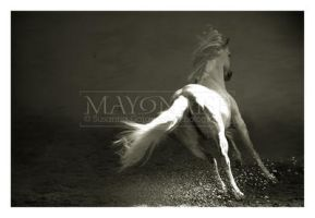 horse - 3 by mayonaise1980