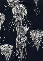Drifting Jellyfish by albinoblackdude9