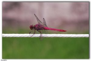 Tightrope Walker by Sgnappy
