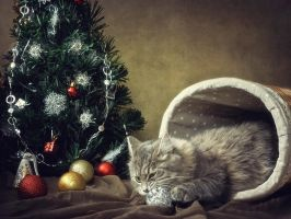 From the series Under the Christmas tree by Daykiney