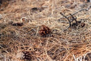 All Alone Pinecone by CopyrightLaurel