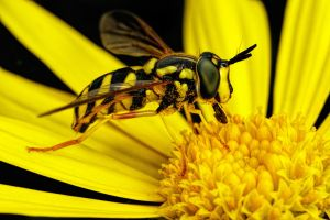 Eating Pollen Series 1-1 by dalantech