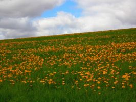 Dandelions and sky above by DewSoul