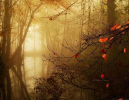 And Then Autumn Came by Nelleke