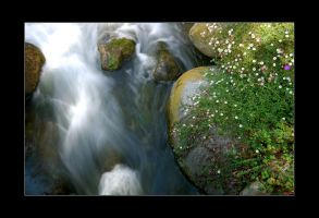 Moss and Rapids by souk1501