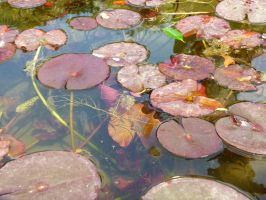 Lily Pads by XiuLanStock
