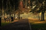 Morning in the park by bibanus