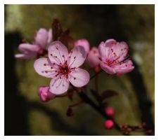 in bloom XI by 250981