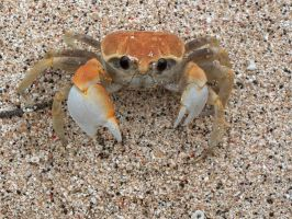 Crab by Denite