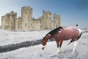 O R E O . TWO by MiddysGraphics