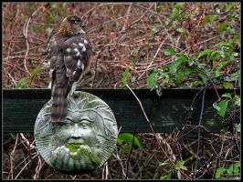 Sparrow Hawk 2 by cycoze