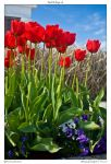 Red Tulips v2 by yellowcaseartist