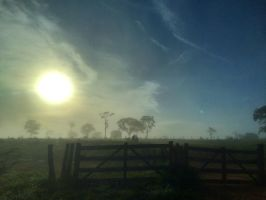 Foggy Morning by micahgoulart