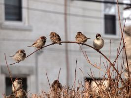 Wintering Finches 04 by tmfNeurodancer
