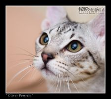 Oliver Closeup by wazabees