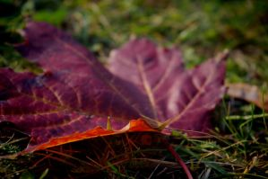 Autumn is coming by waldrose