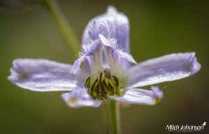 Inside the Violet Flower by mjohanson