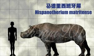 Hispanotherium matritense by sinammonite