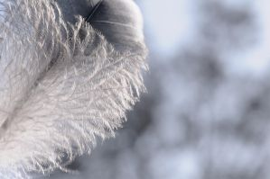 feathery by fcw77