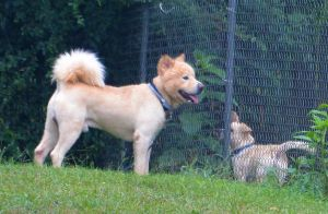 Dog and friend 7-19-14 by Tailgun2009