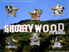Shortywood Pit Bull Banner by Puppie4eveR